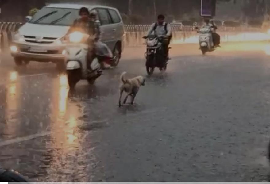 Rain in Madhya Pradesh :  इंदौर में धूप के बाद जोरदार बारिश, सड़कों पर बह निकला पानी, देखें वीडियो