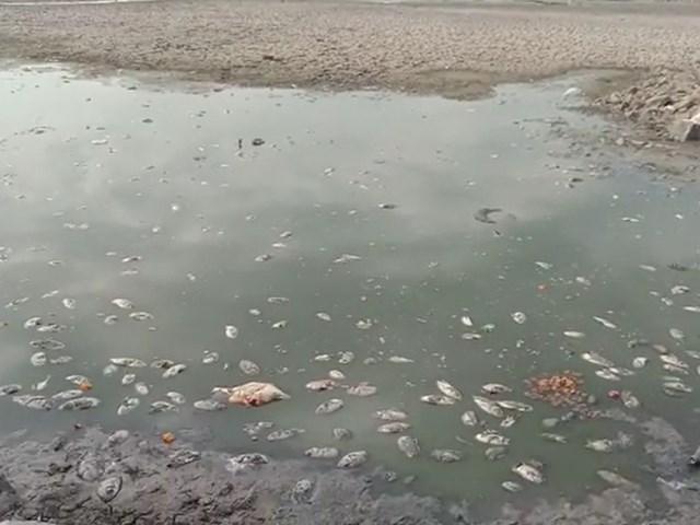 Indore: अप्रैल में ही सूख गया रीजनल पार्क तालाब, हजारों मछलियों की मौत