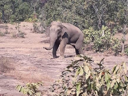 VIDEO : घायल हाथी ने हाईवे किनारे डाला डेरा, यात्रियों को दी ये चेतावनी