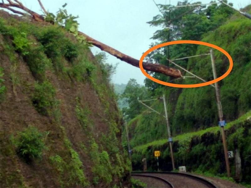 इटारसी के पास रेलवे की ओएचई लाइन पर गिरा पेड़, चार घंटे थमा रहा यातायात