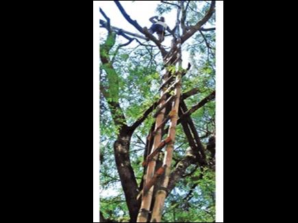 जगदलपुर में नेटवर्क बेहाल, पेड़ पर चढ़कर करना पड़ता है कॉल
