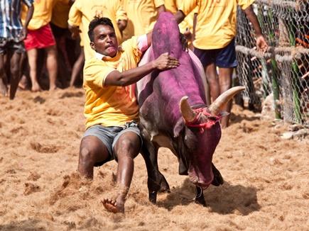 जल्लीकट्टू पर तमिलनाडु के नए कानून को सुप्रीम कोर्ट में चुनौती