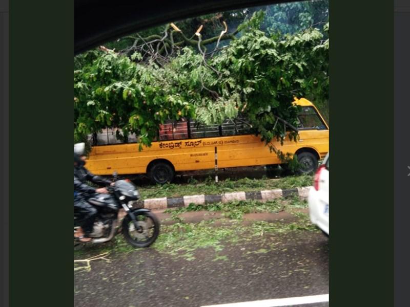 कर्नाटक में स्कूल बस पर गिरा पेड़, गाड़ी में सवार थे 17 बच्चे