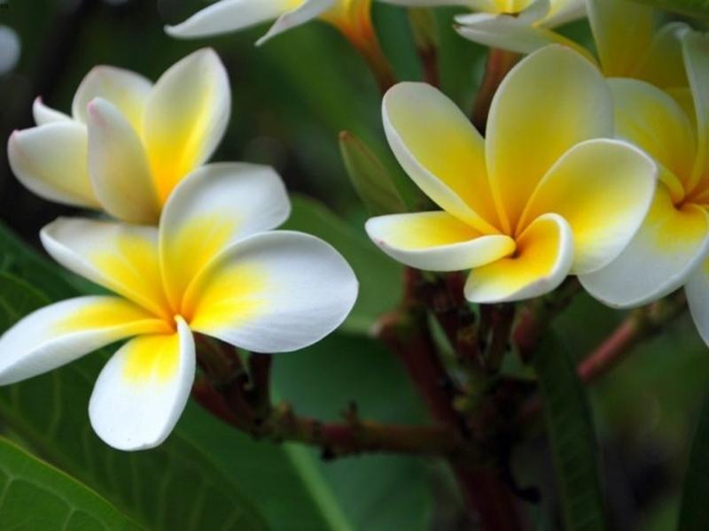 Shradh Paksha 2019: श्राद्ध पक्ष में नहीं होता इस फूल का इस्तेमाल, जानिए इसको मिले श्राप की कहानी