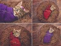 परिवार ने किया बिल्ली के बच्चे का शानदार 'न्यूबोर्न' फोटो शूट
