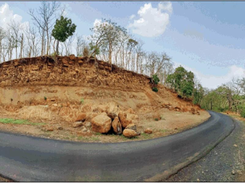 पौधे लगाने लाखों खर्च कर रहे, पर केरवा में मिट्टी कटाव से मर रहे पेड़ों को बचाने की चिंता नहीं