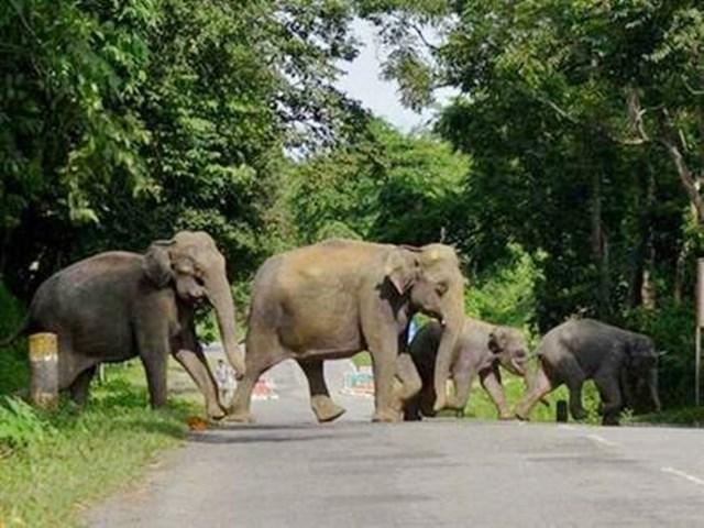 Korba News : हाथियों ने बदल लिया अपना रूट, इससे हो रहा ये बड़ा फायदा