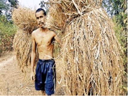 बस्तर का कोसरा चावल नासिक में बन गया शुगर फ्री राइस
