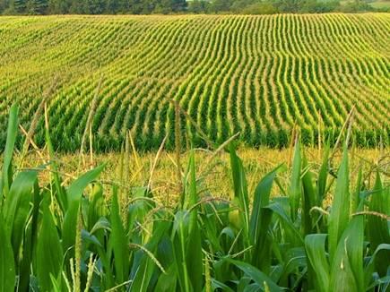 मप्र के आगर और अालीराजपुर सहित देश में 25 नए कृषि विज्ञान केंद्र खुलेंगे