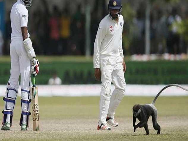 क्रिकेट की पिच पर जानवरों का हमला