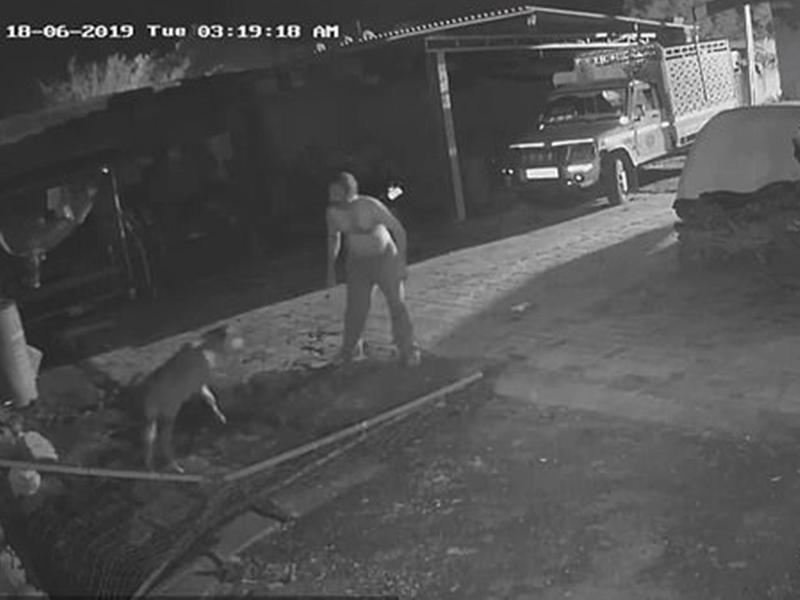 बछड़े को देख आंगन में घुस आया शेर, मालिक ने तत्काल किया कुछ ऐसा, CCTV में घटना कैद
