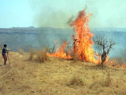 मांडू के जंगल में भीषण आग, हजारों पेड़-पौधे झुलसे