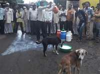 महाराष्ट्र में दूध के दाम बढ़ाने को लेकर सड़कों पर उतरे किसान