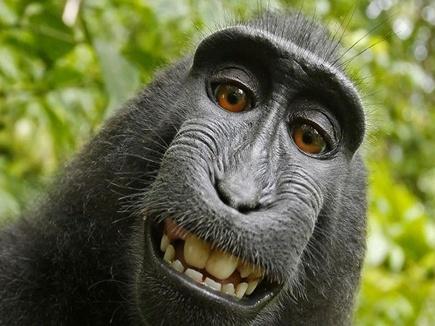 monkey- 03 08 2016