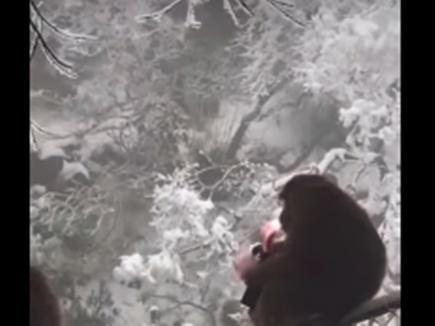 VIDEO: बंदर ने छिना टूरिस्ट का पर्स और हवा में उड़ा दिए पैसे