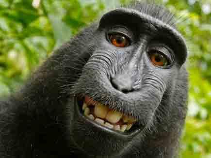 monkey 22 08 2014