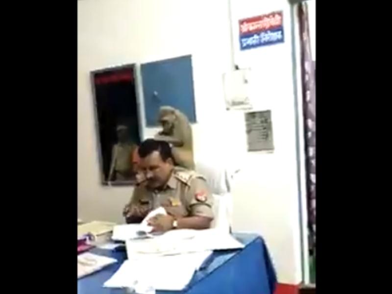 VIRAL VIDEO : जब थानाध्यक्ष के कंधे पर बैठा बंदर जुएं बीनने लगा, देखकर हंसी नहीं रूकेगी