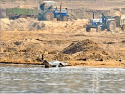 रेत माफिया ने 3 किमी तक खोद दी चंबल, उजड़ गए घड़ियालों के घर