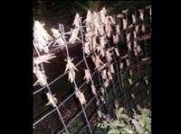 हाइवे पर मुसीबत बने मृत पड़े टिड्डे, ब्रेक लगाते ही फिसल रहे वाहन