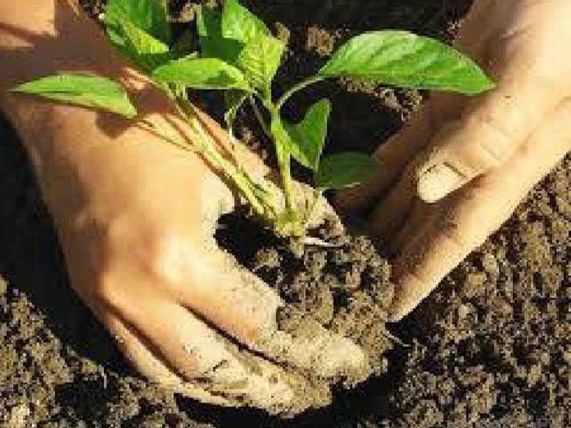 मध्यप्रदेश में पौधरोपण मामला : निशाने पर कई आईएफएस अफसर, बड़ी सर्जरी की तैयारी