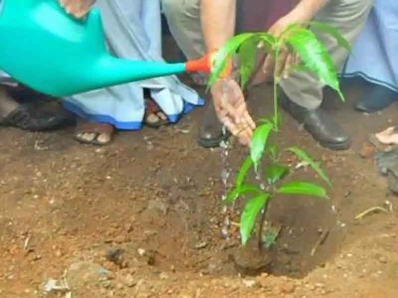 Plantation in Madhya Pradesh : पौधारोपण में 450 करोड़ का घोटाला, शिवराज व शेजवार के खिलाफ ईओडब्ल्यू को प्रकरण सौंपने की तैयारी
