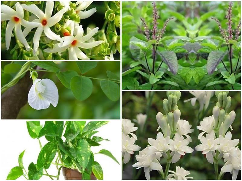 घर में लगाएं ये शुभ पौधे, मिलेंगे ऐसे चमत्कारी परिणाम