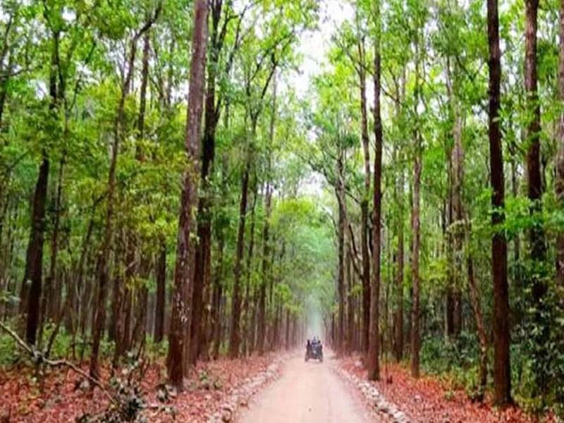 Chhattisgarh Forest : छत्तीसगढ़ देश का तीसरा हरा-भरा राज्य, 44 फीसद धरती पर छाए हैं वन