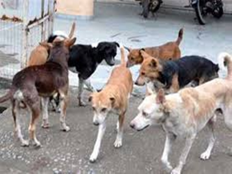 Ashok nagar News : अस्पताल के गेट पर नवजात के शव को नोंचते रहे कुत्ते