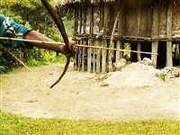 Bijapur News: नक्सलियों ने तीर मारकर की आरक्षक की निर्मम हत्या, गांव में दहशत