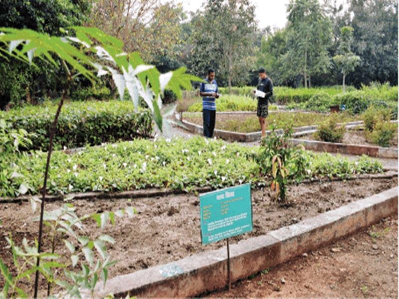 रायपुर में 12 एकड़ के गार्डन में 250 औषधियों के पौधे, मिल रही उपचार भी की जानकारी