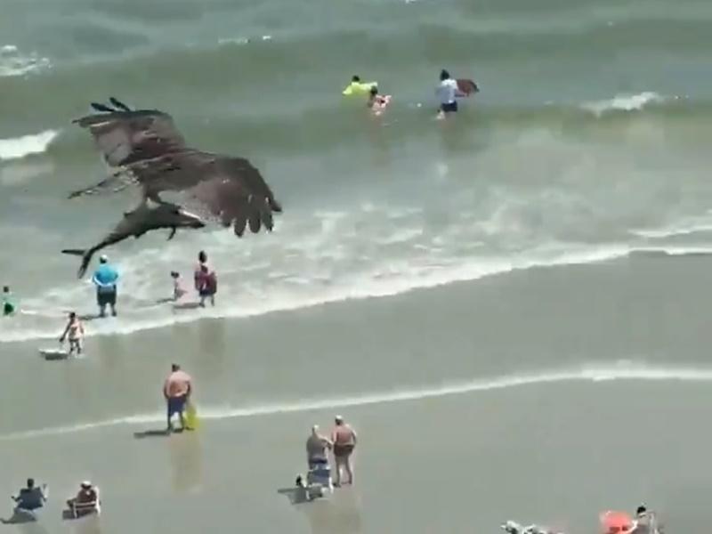Viral Video: समुद्र में से Shark को पंजे में दबाकर उड़ा यह 'विशालकाय' पक्षी, वीडियो देख सन्न रह गए लोग