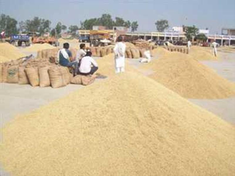 Ambikapur News : तीसरे दिन से ही समितियों में बढ़ने लगी धान की आवक