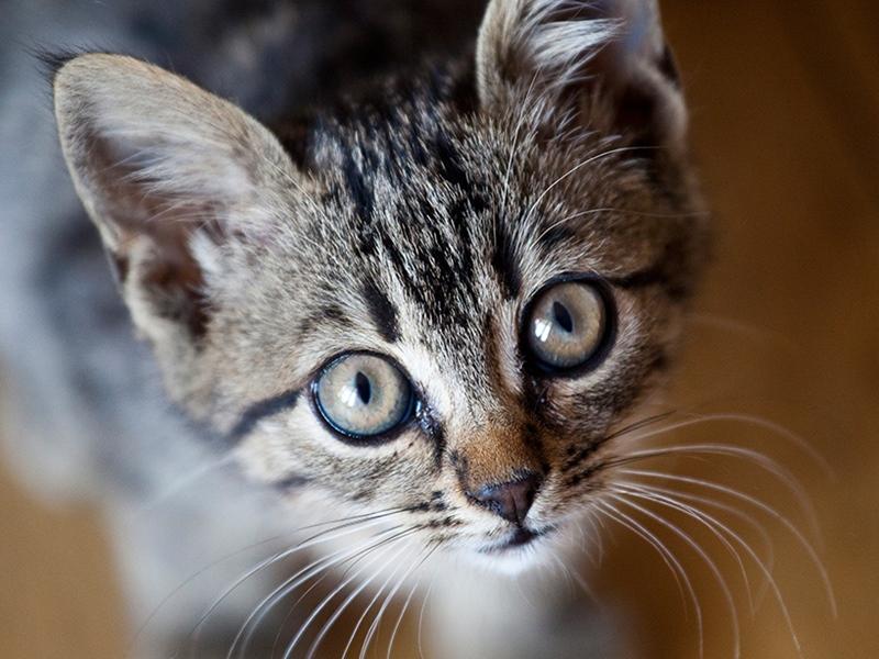 केरल की हथिनी के बाद अब गर्भवती बिल्ली आई चर्चा में, जानिए क्या है पूरा मामला