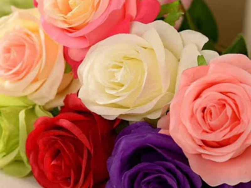 Happy Rose Day 2020: गुलाब के हर रंग के हैं खास मायने, गिफ्ट करते वक्त रखें इन बातों का ध्यान