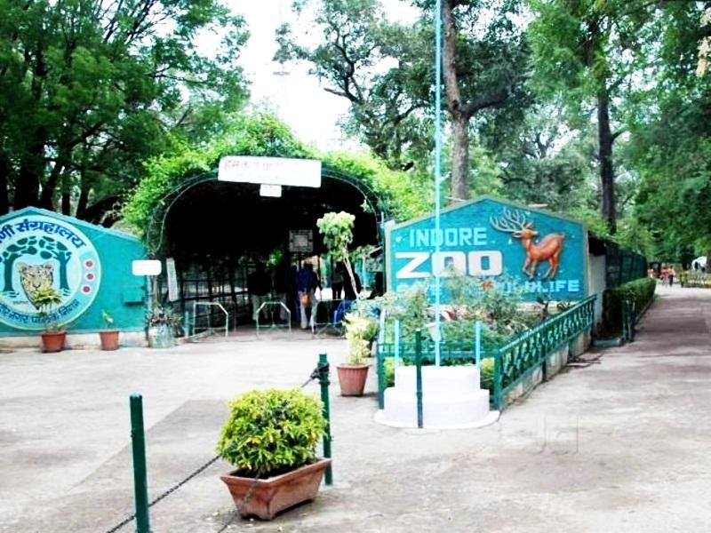 Indore Unlock1: इंदौर चिड़ियाघर के जानवरों को रास आया लॉकडाउन, सेहत में हुआ सुधार