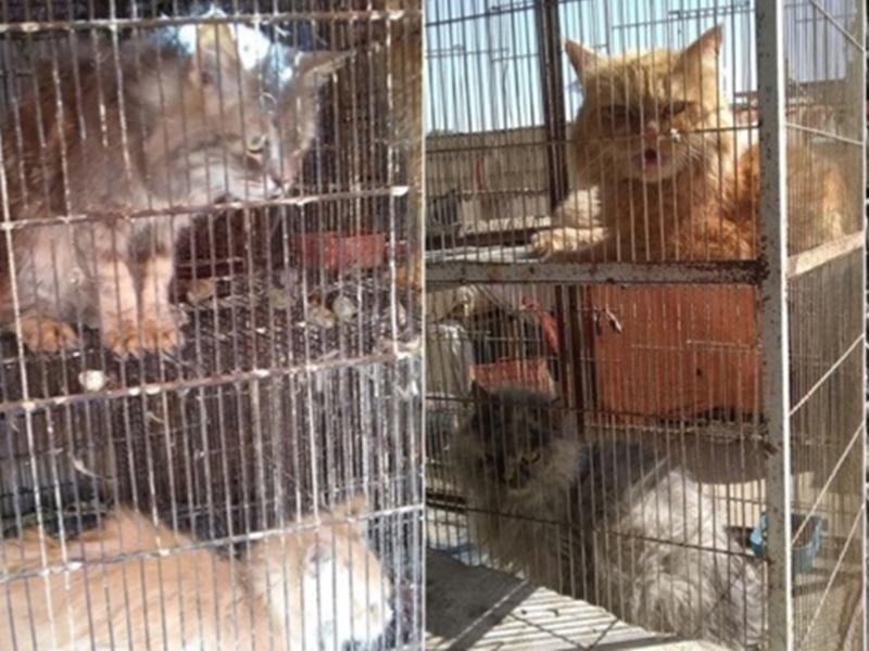 पाकिस्तान के पशु बाजार में पिंजरे में बंद सैकड़ों कुत्ते, बिल्ली और खरगोश मरे मिले