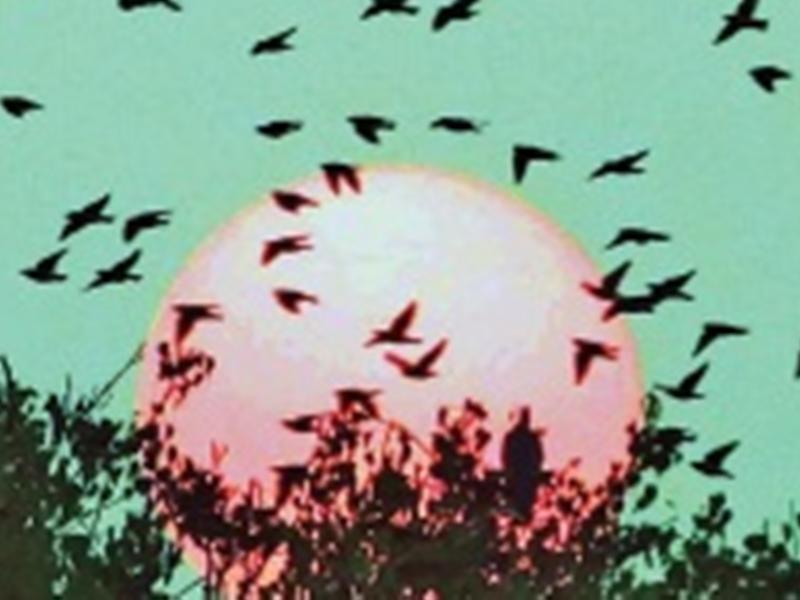 ग्वालियर अंचल में कहीं बादलों से ढंका आसमान, तो कहीं पक्षी इस तरह पा रहे सर्द मौसम से निजात