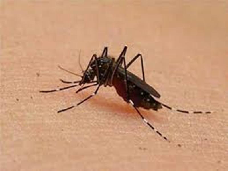 ग्वालियर में बढ़ रहे हैं डेंगू के मरीज, उदासीन है स्वास्थ्य विभाग का अमला