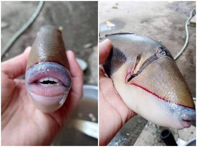 Fish in Malaysia: यहां मिली इंसानी चेहरे वाली मछली, पूरी दुनिया हैरान !