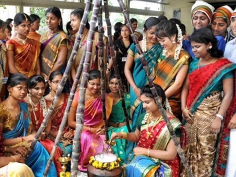Happy Pongal 2020: दक्षिण भारत का विशेष पर्व है पोंगल, जानिए इसकी कथा
