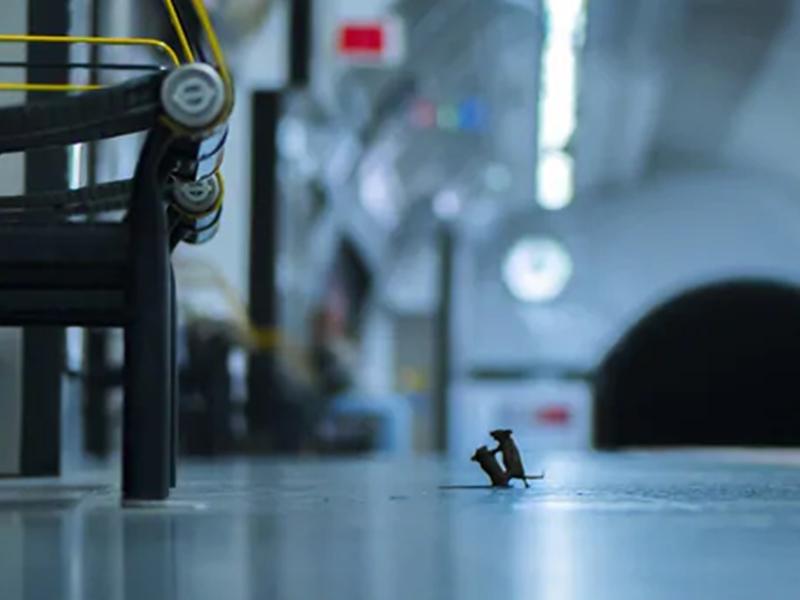 चूहों की लड़ाई की इस फोटो को मिला अवॉर्ड, देखिए अन्य रोचक तस्वीरें