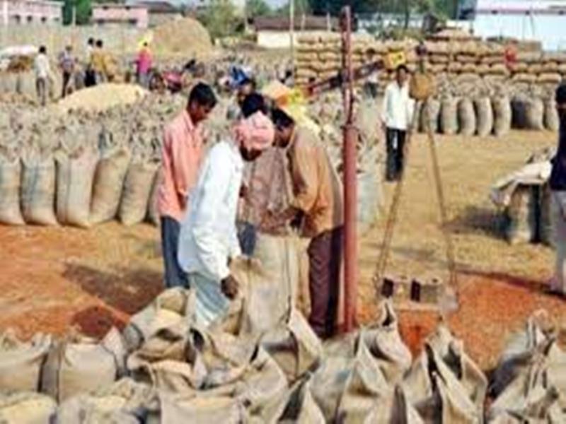 Paddy purchase in Chhattisgarh : छत्तीसगढ़ में अब तक 78.29 लाख मीट्रिक टन धान की खरीद