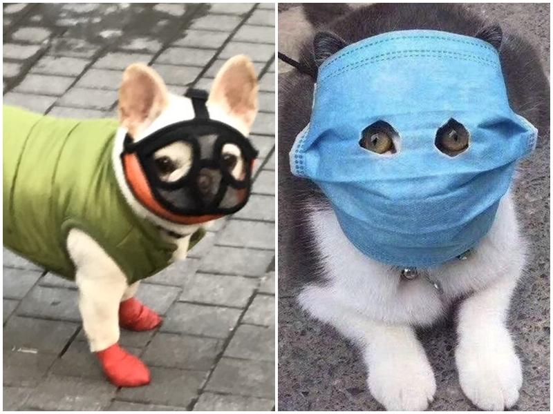 Coronavirus Outbreak : पालतू जानवरों को भी चीन में पहनाया जा रहा है मास्क, तस्वीरें वायरल