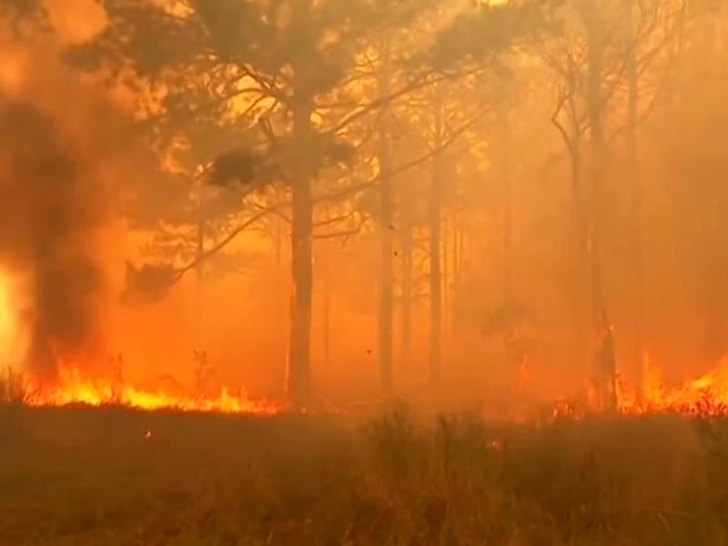 Australian Bush Fire : तीन महीने नहीं होगी बारिश, और भड़क सकती है ऑस्ट्रेलिया की आग