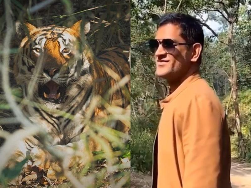 जब MS Dhoni के सामने आ गया एक Tiger, जानिए फिर क्या हुआ