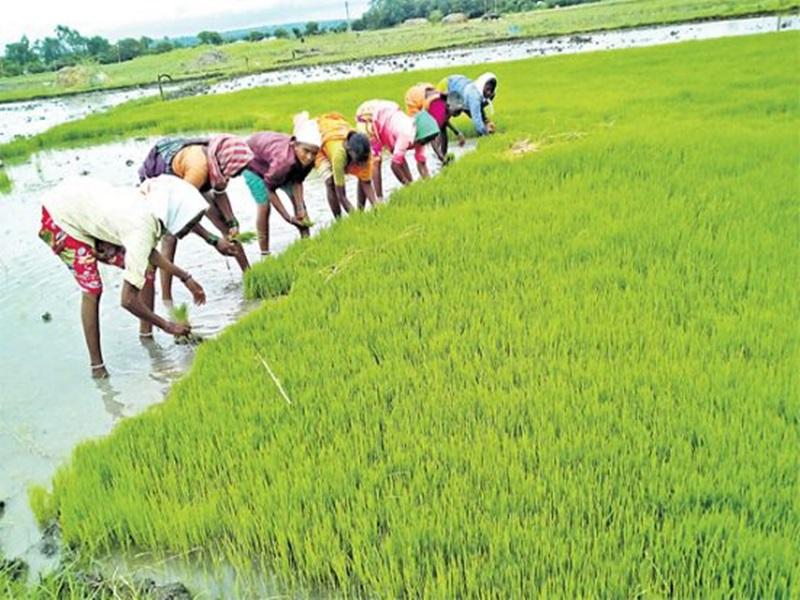 New Initiatives in Chhattisgarh: धान के कटोरे में अब जैविक खाद और जैव ईंधन की पहल