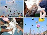 Ahemdabad : संक्रांति पर पतंग के मांझे से 3 हजार से ज्यादा पशु पक्षियों सहित 186 लोग घायल