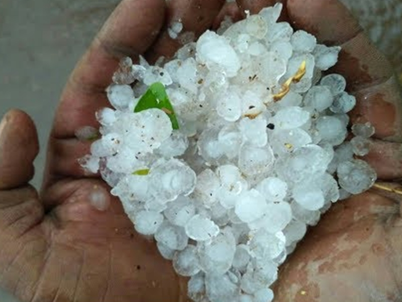Rain in Gwalior-Chambal region : भिंड-मुरैना, दतिया में गिरे ओले, पोरसा में दीवार गिरने से एक की मौत