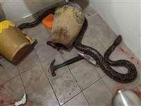 टॉयलेट में सांप ने किया महिला की जांघ पर हमला, इसके बाद जो हुए वह रोंगटे खड़े कर देगा