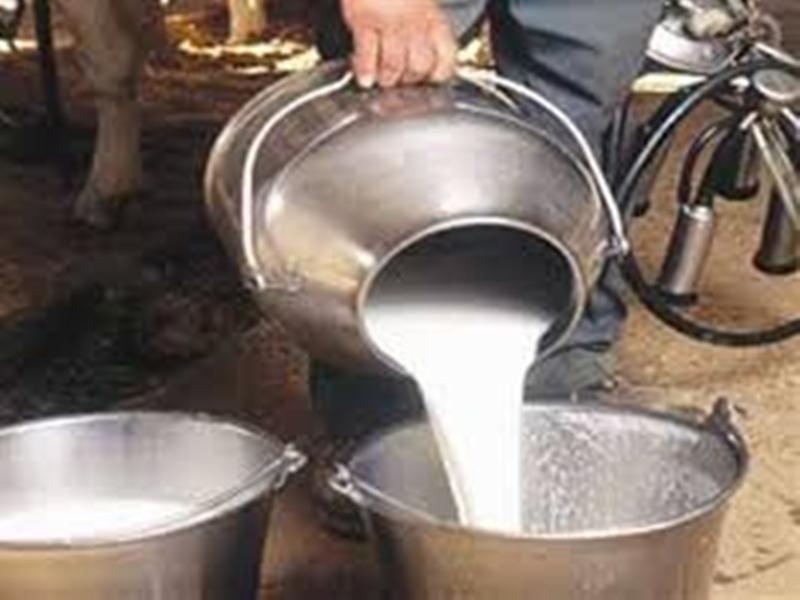 Morena News : प्रशासन का ध्यान कोरोना नियंत्रण पर, सिंथेटिक दूध व पनीर बनाने वाले हुए अनियंत्रित